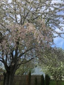 Image: Flowering Tree