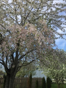 Image: Flowering Tree